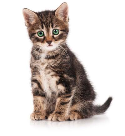 Sad-Kitty.jpg
