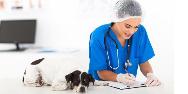 Careers at Intermountain Pet Hospital and Lodge