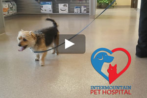 Pet Acupuncture Success Story