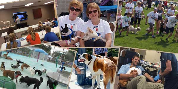 Loving all dogs, cats and pets of the Treasure Valley