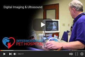 Digital Imaging and Ultrasounds