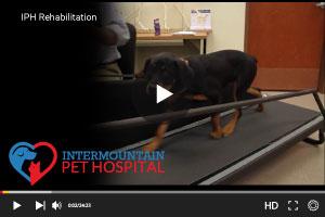 Rehabilitation for dogs