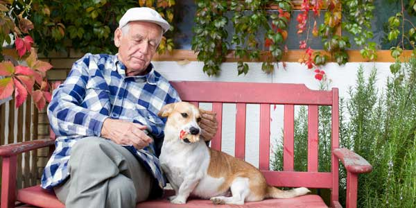 Hospice care for your terminally ill pet