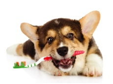 puppy holding toothbrush