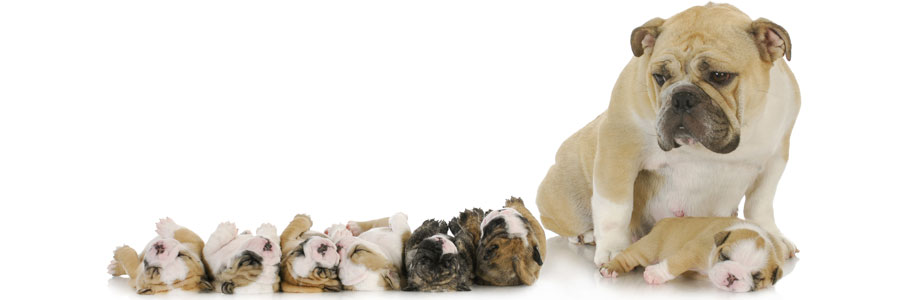 reproduction-mom-puppies.jpg
