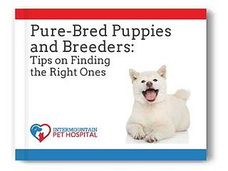 Pure Bred Puppies and Breeders