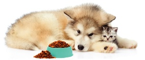 dog and kitten eating