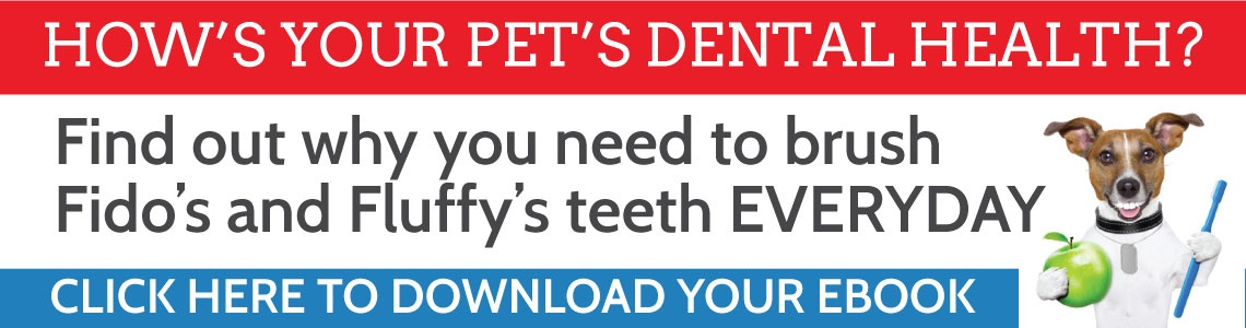 Your pet's dental heath is so important