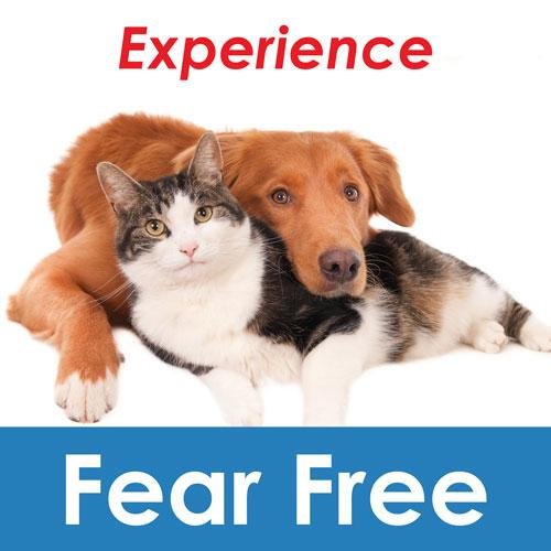 experience fear free with your dog or cat