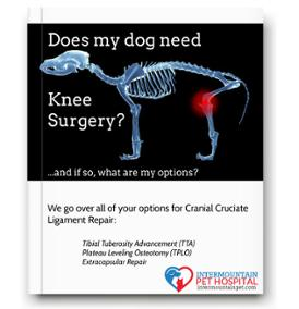 CCL rupture in dogs