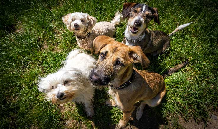 doggie day care Boise