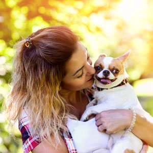 Happy chihuahua client