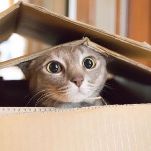 Cat hide and seek