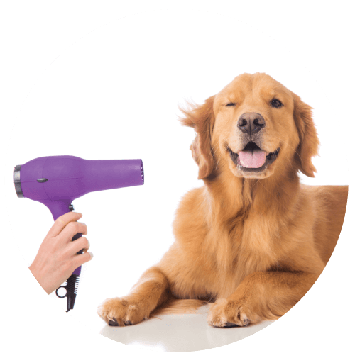Full Pet Grooming Services