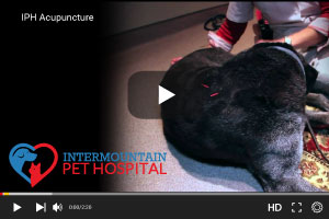 Pet acupuncture