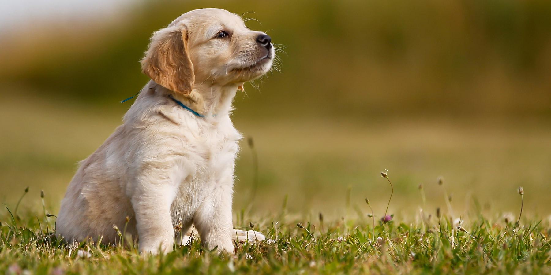 Puppy veterinarians